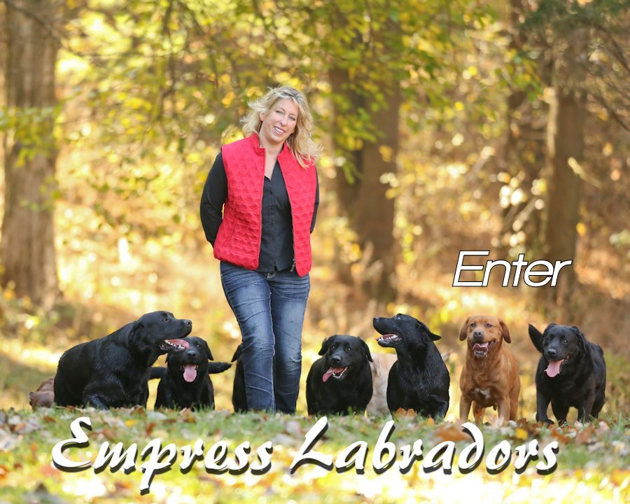 Empress Labradors Illinois Labrador Retrievers Breeder